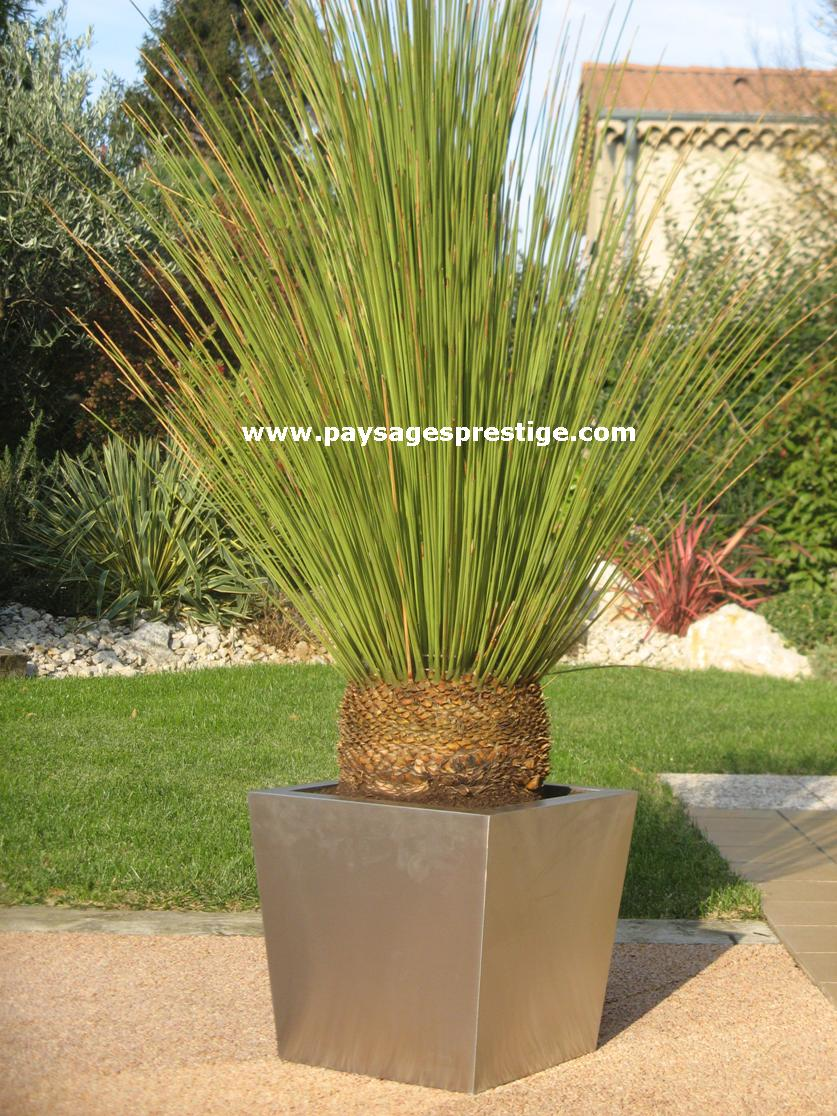 Plante pour pot exterieur homeezy for Pot a plante exterieur